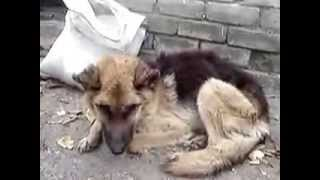 Группа помощи животным