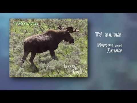 Wild Peers: Yellowstone - Moose Encounters - Eland in Beeld