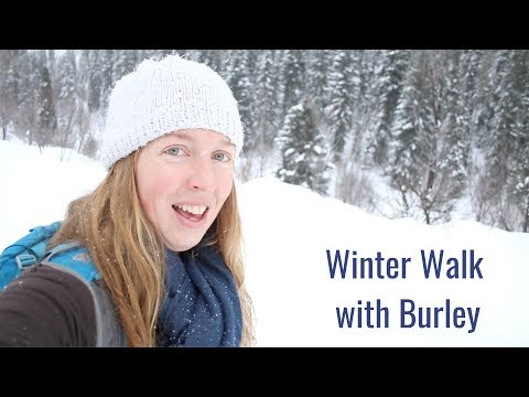 life-in-a-tiny-house-called-fy-nyth---winter-walk-with-burley