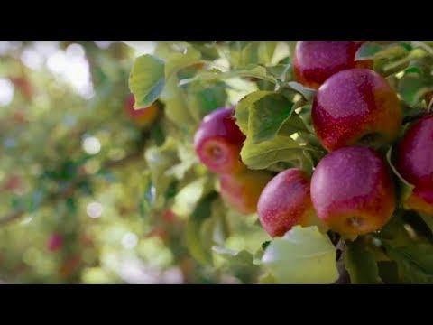 Fruit fly - PIRSA