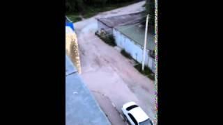 Жительница Тынды сняла на видео гуляющего в городе медвежонка  (полная версия)(Сегодня утром жительница столицы БАМа сняла из окна собственной квартиры на видео медвежонка, гуляющего..., 2015-07-30T08:58:14.000Z)