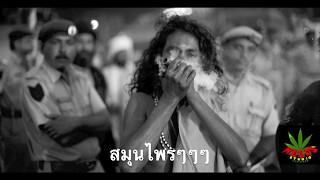 กัญชาแมน(Ganja Man) - ไทยราสต้ามาร