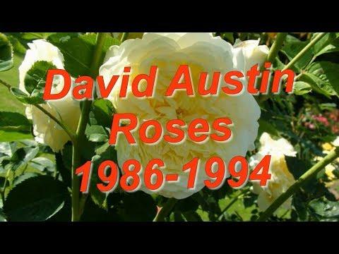 David Austin Roses 1986 1994 Все сорта роз Дэвида Остина 1986-1994