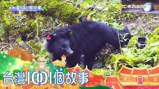 南安小熊野放山林 保育協會感動紀錄 part6 台灣1001個故事