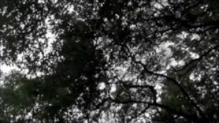 2011/11/9発売 天野月NewAlbum 『薔薇と真珠』より「薔薇のように」の手...