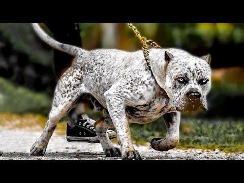 10 Gentle Gigantic Dog Breeds
