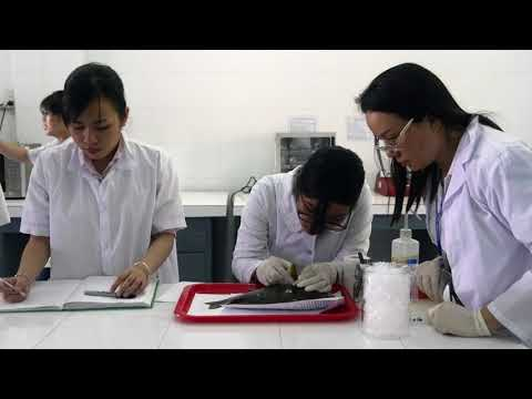 Vietnamese Scientist Eyes Fish Genetics as a Development Tool