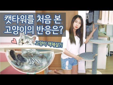 [샒의삶] 캣타워를 처음 본 고양이의 반응은? 자룡이를 위한 캣타워(캣폴) 조립하기! feat.고양이 액체설
