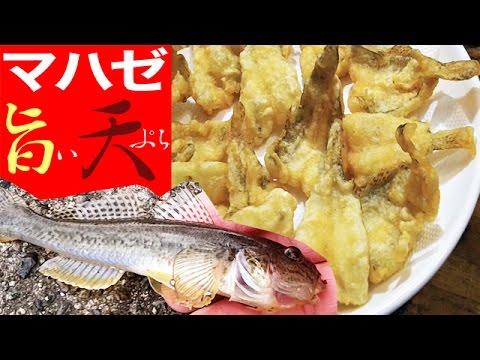 マハゼを釣って食う 超おいしい天ぷら