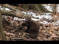 Trapping Furbearers Hunter s Trapline 2017