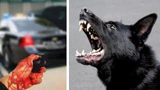 Der Polizeibeamte wird zusammengeschlagen - dann lässt er seinen Hund frei!