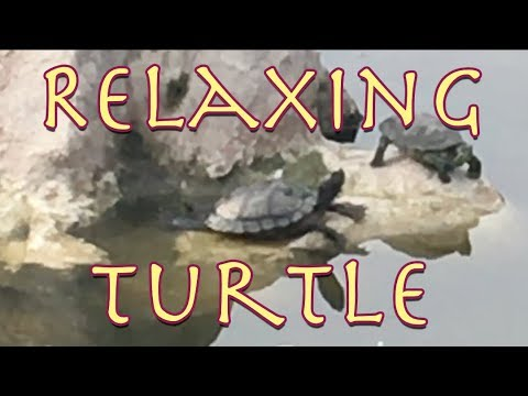 Relaxing Turtle  Experimental relaxation  from Parry Gripp