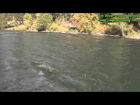 -Upper Rogue River Summer Steelhead Quick Clip Video- Oregon Steelhead Salmon and Trout Fishing