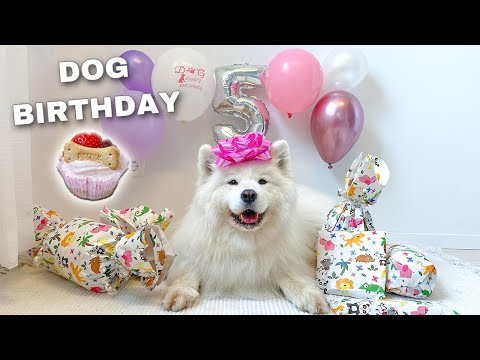 My Dog Does Her Favorite Things On Her Birthday !