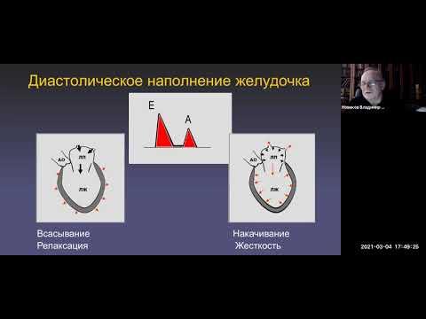 Эхокардиографическая оценка сердечной