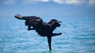 Жаль эту собаку! И такое бывает в животном мире!