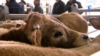 SIA 2016 : La problématique de la viande bovine sur le marché de Laissac, dans l'Aveyron