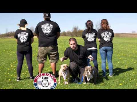 1st ESKC Upstate New York Bully Show 2016