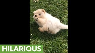Running puppy wipes out in epic slow motion
