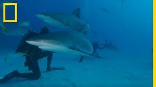 Plongée sans cage à 180° avec des requins