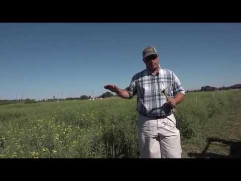 FS Disease Crop Walk  Ken Coles