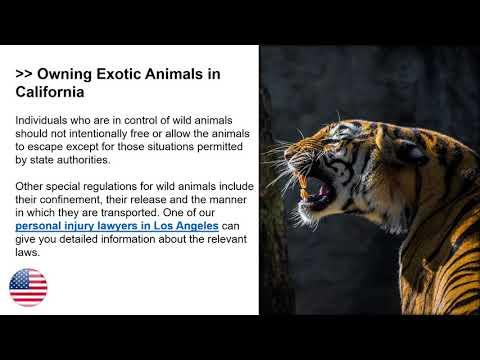 Wild Animal Bites