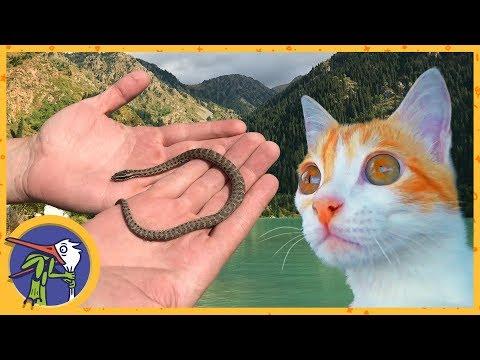 Едем на озеро Иссык. Котик Рыжик и змея