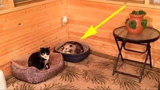 Бабуля верила, что прикормила трех бродячих кошек, но внук раскрыл правду