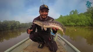 DevilCraft Рибалка ТБ #23 - гігантського змієголові, Кампунг роси
