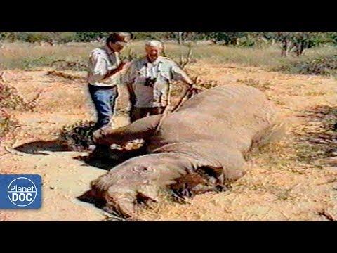 Umfolozi: Tribes & Wildlife - Parte 4