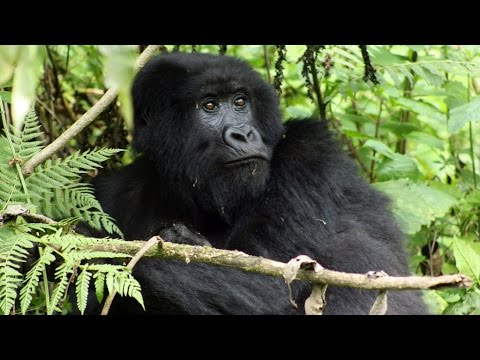 Virunga: UK oil firm accused of bribery in DR Congo national park