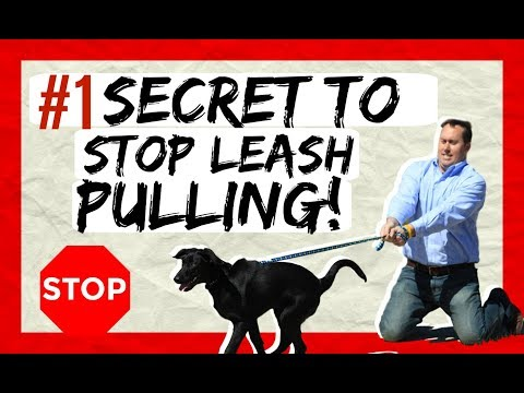 Teach Your Dog To Heel - The Best Way To Stop Leash Pulling Now