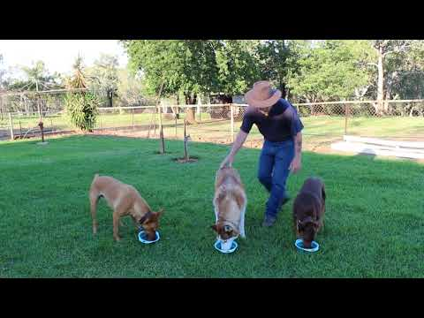 Food Etiquette 05 - Feeding Multiple Dogs