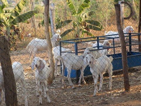 Successful Integrated Farming in Animal Husbandry