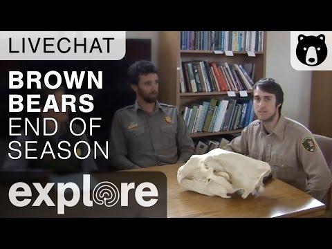 End Of Brown Bear Season Katmai National Park - Live Chat