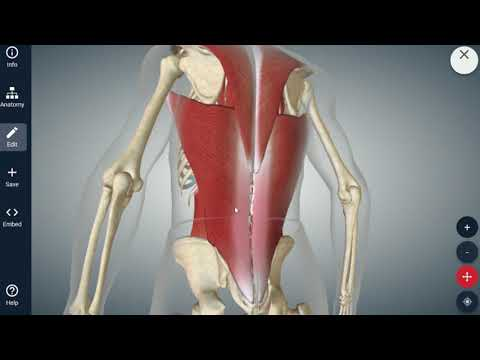 Learning About Lumbar Strain