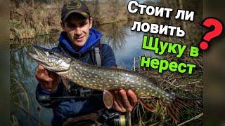 Стоит ли ловить ЩУКУ в нерест Ловля хищника на микроречке Рыбалка на микроджиг весной