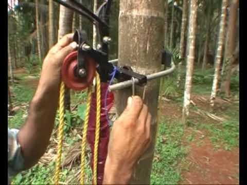 Arecanut Tree Harvesting Amp Spraying Device Youtube