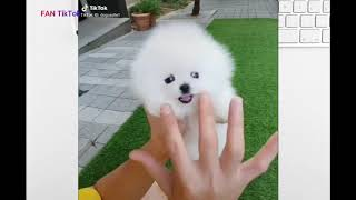 TikTok Việt Nam funny pets ❤️ Những Video Triệu View trên Tik Tok P1 _  Tik Tok funny pets!