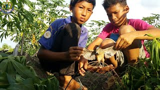 Best Bird Trap Quick For Catching Quails || Children Technique Of Birds Trap