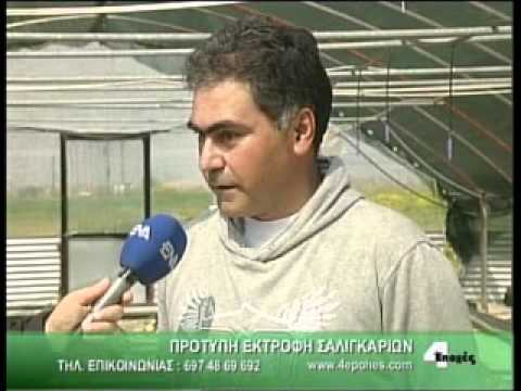 Snail farming Greece - Agrofarma