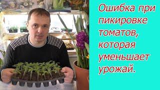 Не пикируйте томаты, пока не посмотрите это видео.