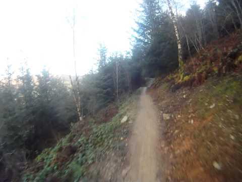 LLANDEGLA FOREST B LINE (lower)