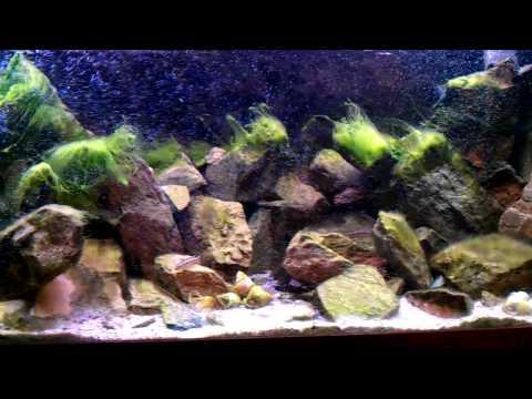 Tanganyika Littoral Zone Aquarium