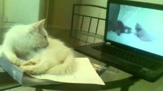 Кошка смотрит трек про котяток