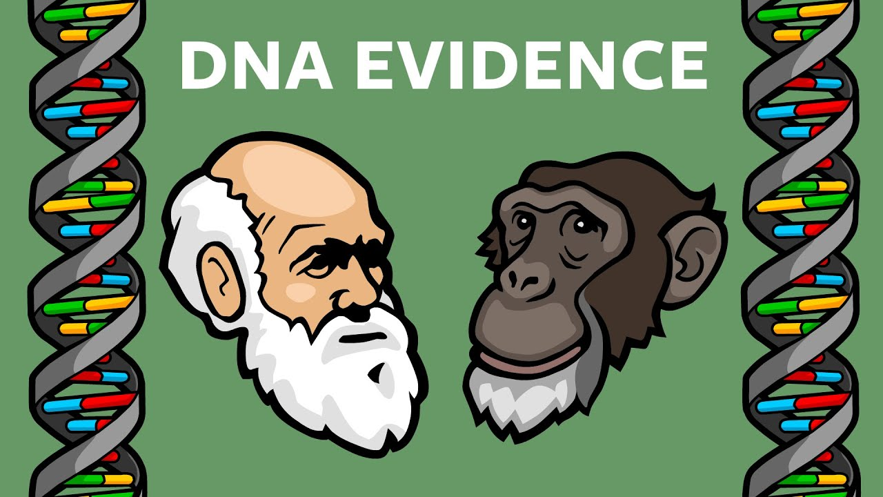 Download DNA Evidence That Humans & Chimps Share A Common Ancestor: Endogenous Retroviruses