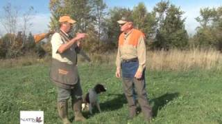 Springer Spaniel Flushing Dog Training