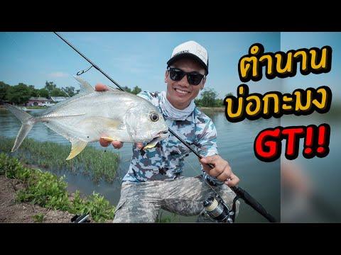 บ่อกะมง! ตำนานบ่อ GT ที่ปิดไปแล้ว แปดริ้ว GT Fishing Pond Thailand ปี 2016
