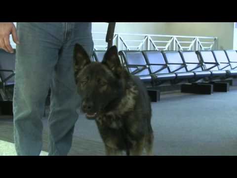 Canton police officer brings new K-9 partner home to Northeast Ohio