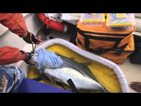 New Training Video On Sport Fishing And Catch Handling